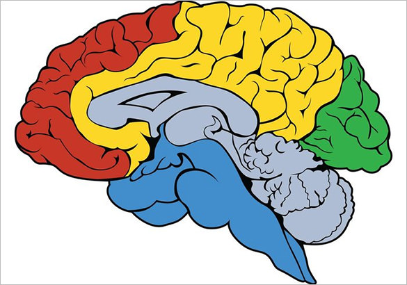 Astonishing-Free-Human-Brain-Vector